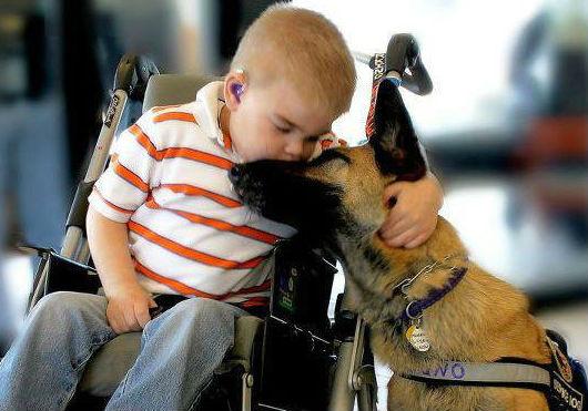 Cani da pet therapy: creature speciali
