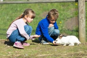 Foto-bambini-coniglio
