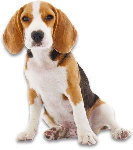 Approccio Aslan agli Interventi Assistiti con gli Animali - Pet therapy Torino