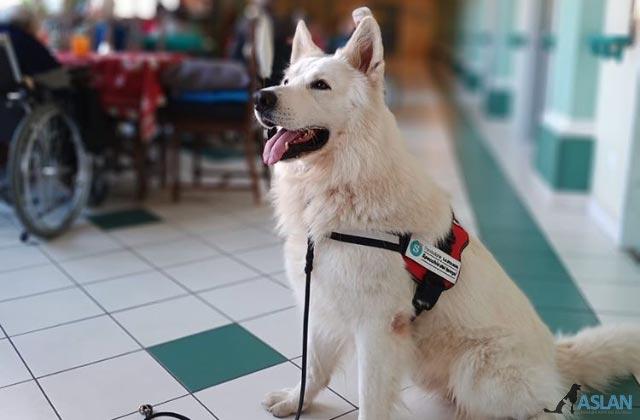 IAA Pet therapy Torino