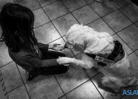 Progetto-Insieme-a-te-un-cane-per-amico-17