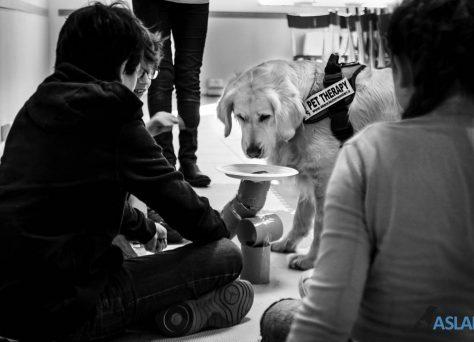 Progetto-Insieme-a-te-un-cane-per-amico-3