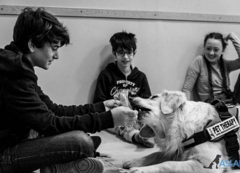 Progetto-Insieme-a-te-un-cane-per-amico-6