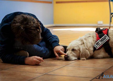Progetto-Insieme-a-te-un-cane-per-amico-8
