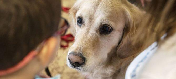 10 luglio. OPEN DAY. PRESENTAZIONE DEI CORSI IN INTERVENTI ASSISTITI CON ANIMALI
