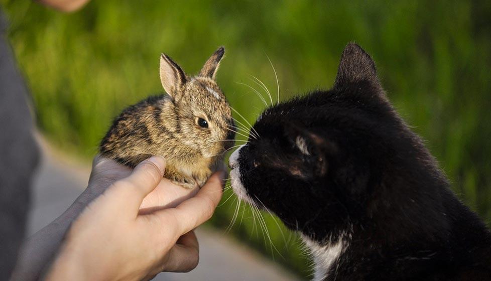 Corso per coadiutore del gatto e del coniglio