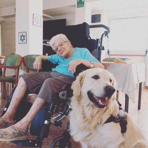 Aslan-pet-therapy