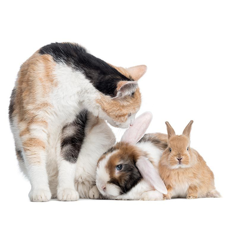 Diventa coadiutore del gatto e del coniglio