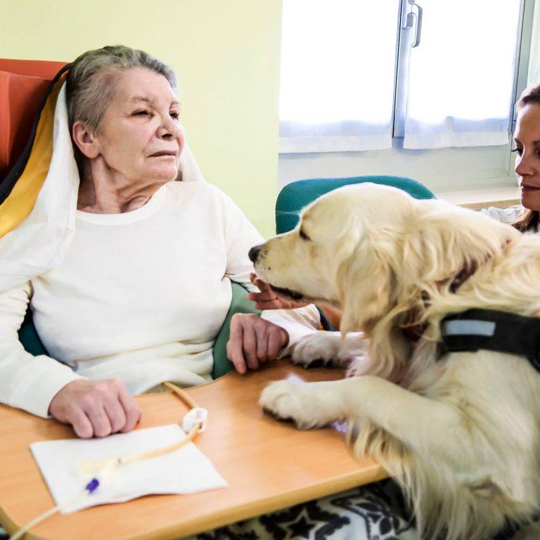 Corsi pet therapy